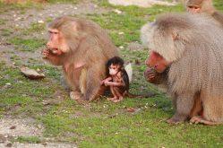 Bursa Hayvanat Bahçesi